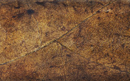 Dried Tobacco Leaf Pattern Royalty Free Stock Image
