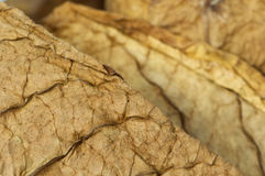 Dried tobacco leaves Royalty Free Stock Images