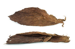 Dried tobacco leaves Royalty Free Stock Image