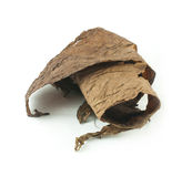 Dried tobacco leaves Stock Photos