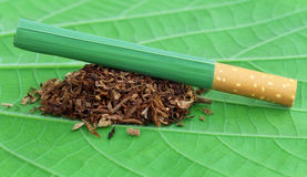 Dried tobacco leaves with cigarette Stock Photo