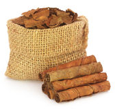 Dried tobacco leaves Stock Images