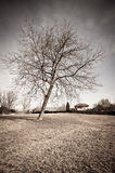 Dried tree Royalty Free Stock Photography