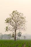 Dried tree Stock Image
