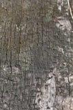 Dried tree bark Royalty Free Stock Photography