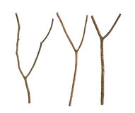 Dried tree branch Stock Photography