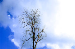 Dried tree with clouds in blue sky Stock Photo