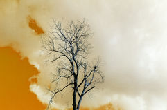 Dried tree with clouds Royalty Free Stock Photos
