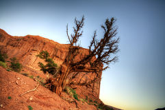 Dried tree in desert of Monument Valley Royalty Free Stock Photo