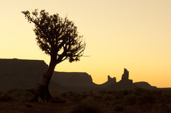 Dried tree in desert of Monument Valley Stock Photography