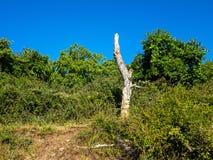 Dried Tree on Green Mountain Stock Photo