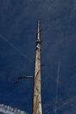 Dried tree II. Dried tree on a beautiful blue sky Stock Photos