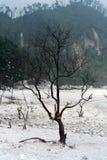 Dried Tree at Kawah Putih Bandung Indonesia Royalty Free Stock Photo