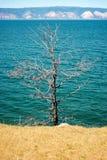Dried tree Stock Photos