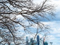 Dried tree and skyscrapers of Moscow-city district. View from observation deck on Sparrow Hills (Vorobyovy Gory) - dried tree and skyscrapers of Moscow-city royalty free stock photos