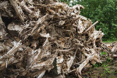 Dried tree stumps from close Royalty Free Stock Photos