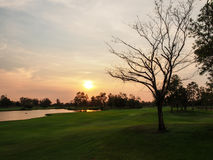 The dried tree with the sunset. The single dried tree on the large yard with the sunsetting moment Royalty Free Stock Photography