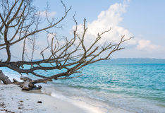 Dried tree at vijay nagar beach Royalty Free Stock Photos