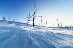 Dried trees on a snowy hillside. Stock Photo