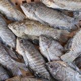 Dried Trichogaster pectoralis fish on threshing basket Royalty Free Stock Photos