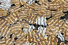 A dried under the sun salty fish Royalty Free Stock Images