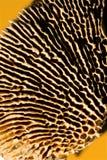 Dried underside of mushroom Royalty Free Stock Photos