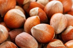 Dried unshelled hazelnuts seeds of Whole nuts as background royalty free stock photography