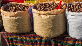 Dried unshelled hazelnuts seeds of Whole nuts. In sacks Royalty Free Stock Photos