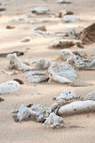 Dried Up Coral On Shiluokou Beach Stock Photo