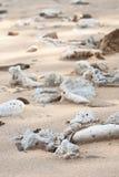 Dried up coral on shiluokou beach. On weizhou island Stock Photo