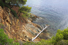 Dried up dead tree on the stone coast Stock Photo