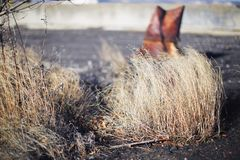 The dried-up grass on the earth. In the fall royalty free stock photos