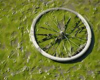 Dried up green river bed reveals bicycle wheel Stock Image
