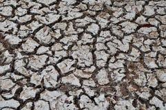 Dried up ground. Near salt lake. Galapagos Royalty Free Stock Photos