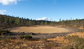 Dried-up Lake in Taiga Forest Royalty Free Stock Images