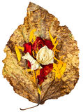 Dried up leaves of poplar with rose and geranium Stock Photography