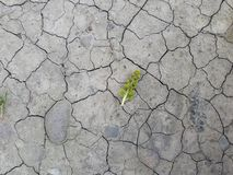 From the dried up and lifeless earth the timid and weak plant makes the way. stock photos