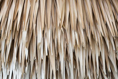 Dried up palm leaves Royalty Free Stock Photos