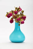 Dried-up red roses in a blue vase isolated on white background Royalty Free Stock Photo