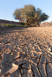 Dried-up River Bed Stock Photos