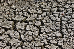 The dried up river bed Royalty Free Stock Photo