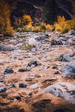 Dried up riverbed with stones and poplars on the shore. The theme of the autumn, yellow leaves, cloudy weather Stock Images