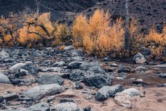 Dried up riverbed with stones and poplars on the shore. The theme of the autumn, yellow leaves, cloudy weather Stock Photography