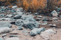 Dried up riverbed with stones and poplars on the shore. The theme of the autumn, yellow leaves, cloudy weather Royalty Free Stock Image