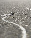 Dried up slug on a street Royalty Free Stock Photography