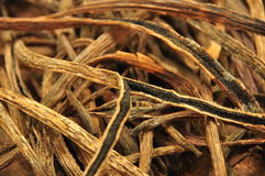Dried vanilla pods Stock Images