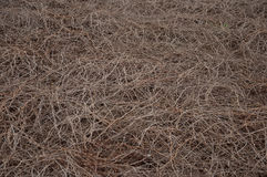 Dried vegetation. For texture or background Stock Photos