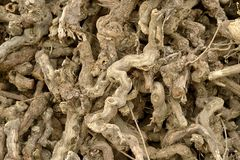 Dried vines Royalty Free Stock Photos