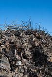Dried vineyard firewood in Utiel Requena of Spain Royalty Free Stock Photography