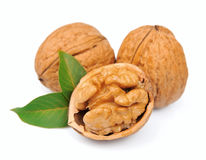 Dried walnut Stock Photography